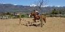 Natural-Horses