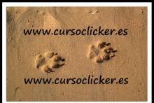 Cursos de Clicker