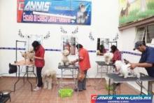 """ESCUELA DE ESTILISTAS CANINOS """"CANIS"""""""