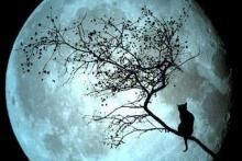 Sueños de Luna- Kamra