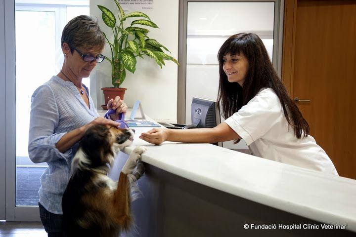 ¿Sabes por qué es imprescindible un auxiliar de veterinaria en una clínica?