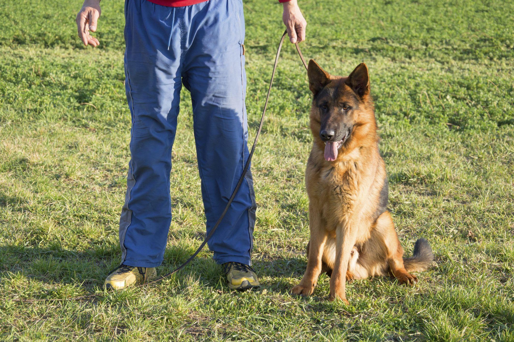 ¿Qué hay que estudiar para ser adiestrador de perros?