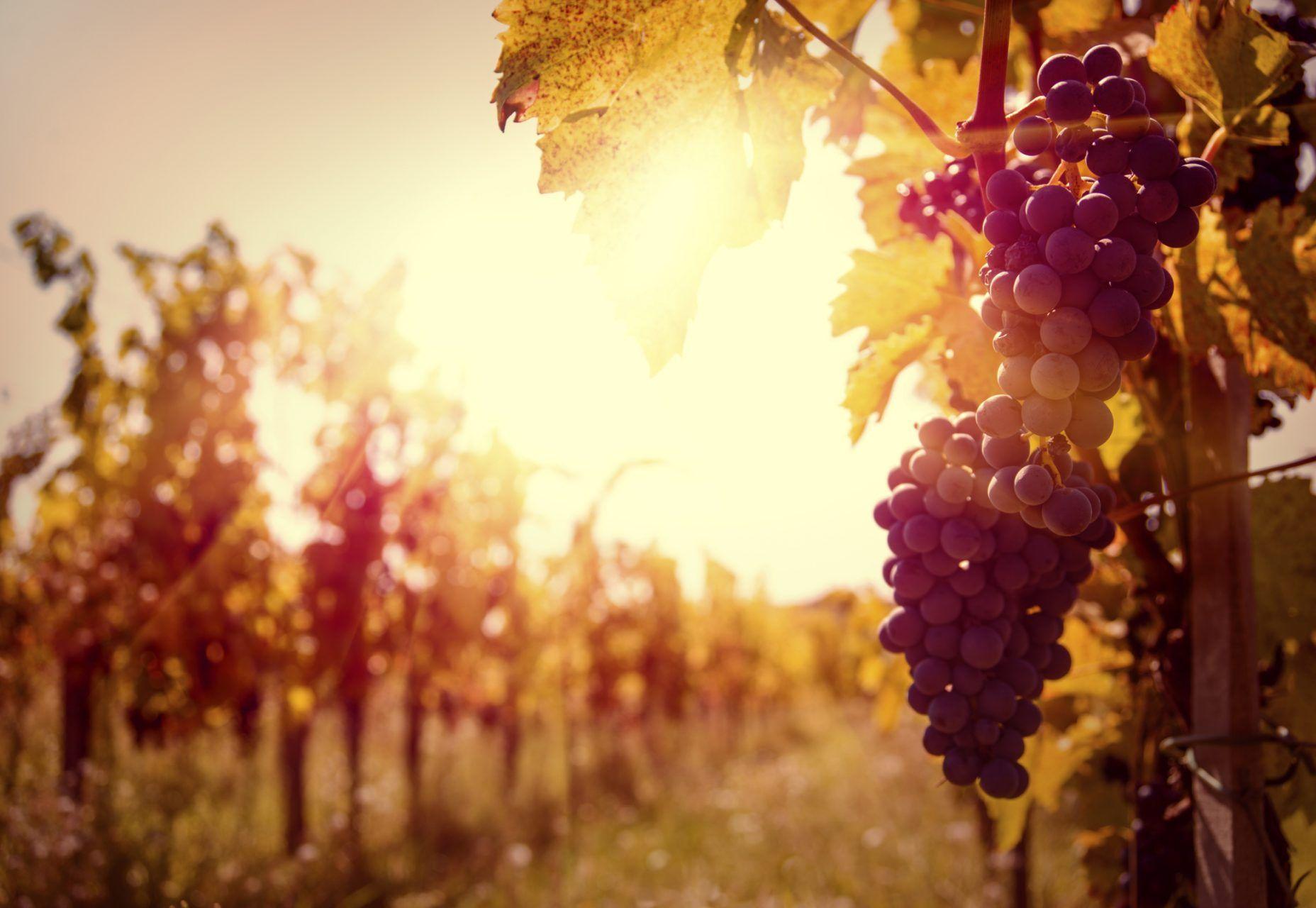 Tres títulos oficiales para trabajar en el sector del vino