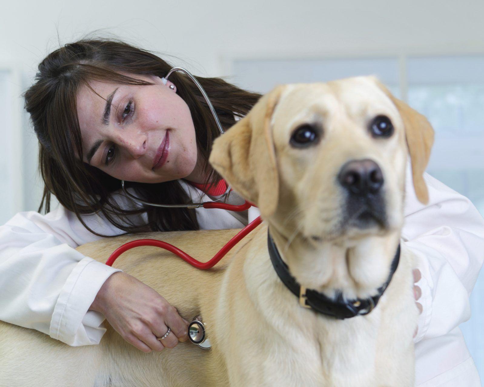 ¿Qué estudiar para ser auxiliar de veterinaria?