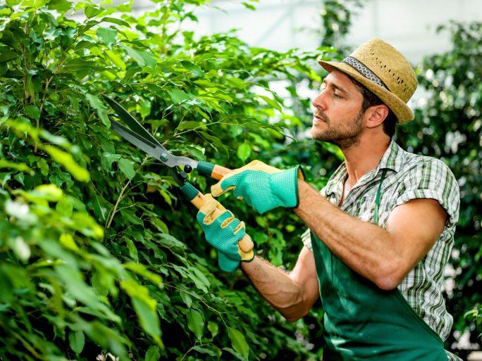 ¿Qué tengo que estudiar si quiero ser jardinero?