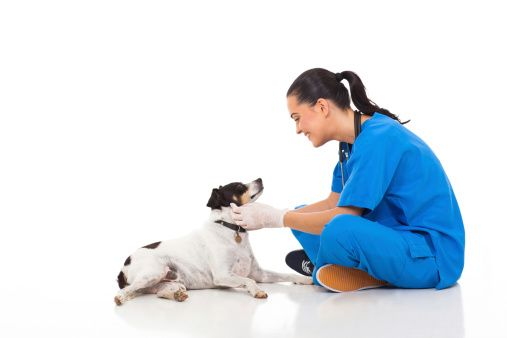 professional vet doctor playing with pet dog