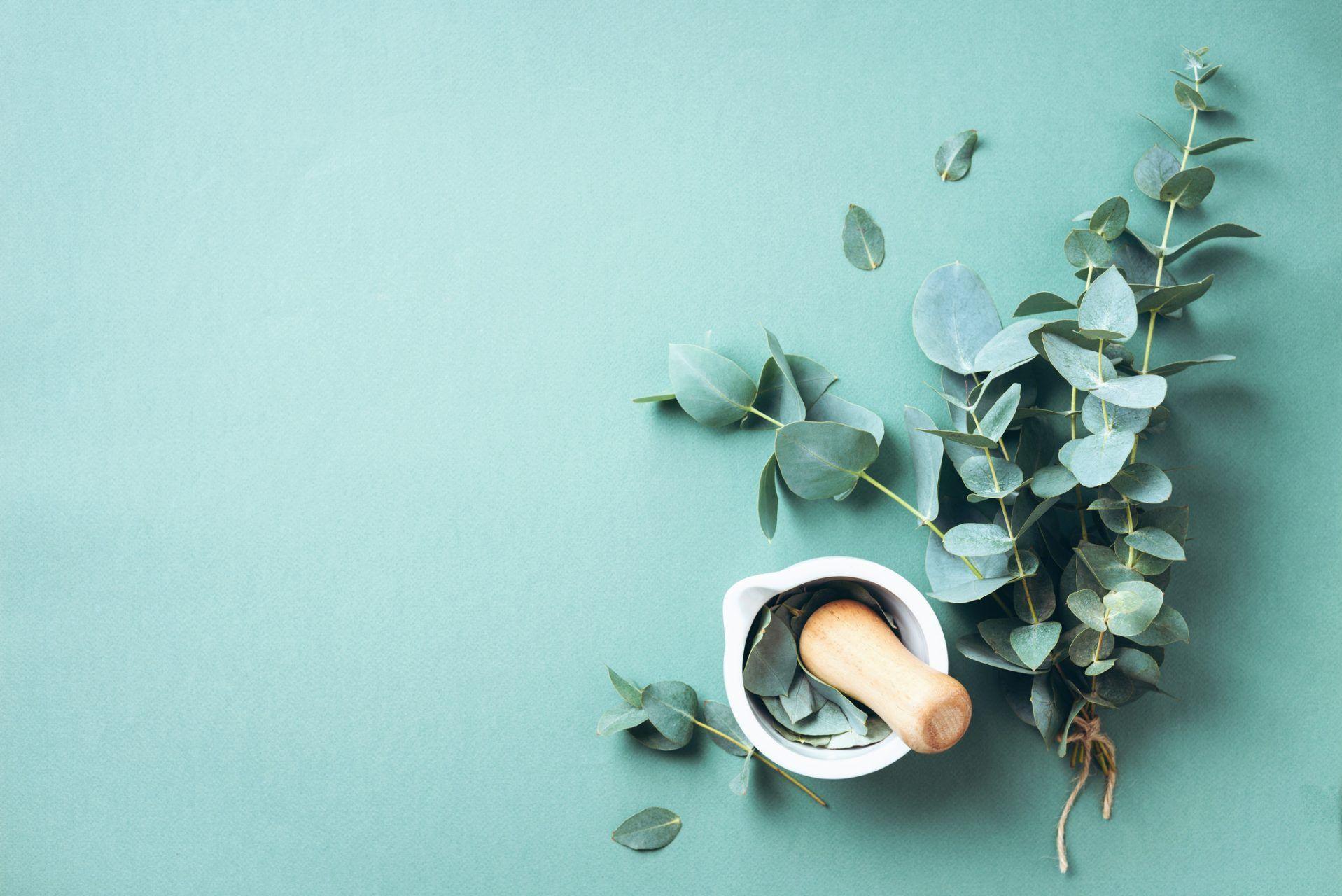 ¿Cuáles son los usos y beneficios de la medicina natural?