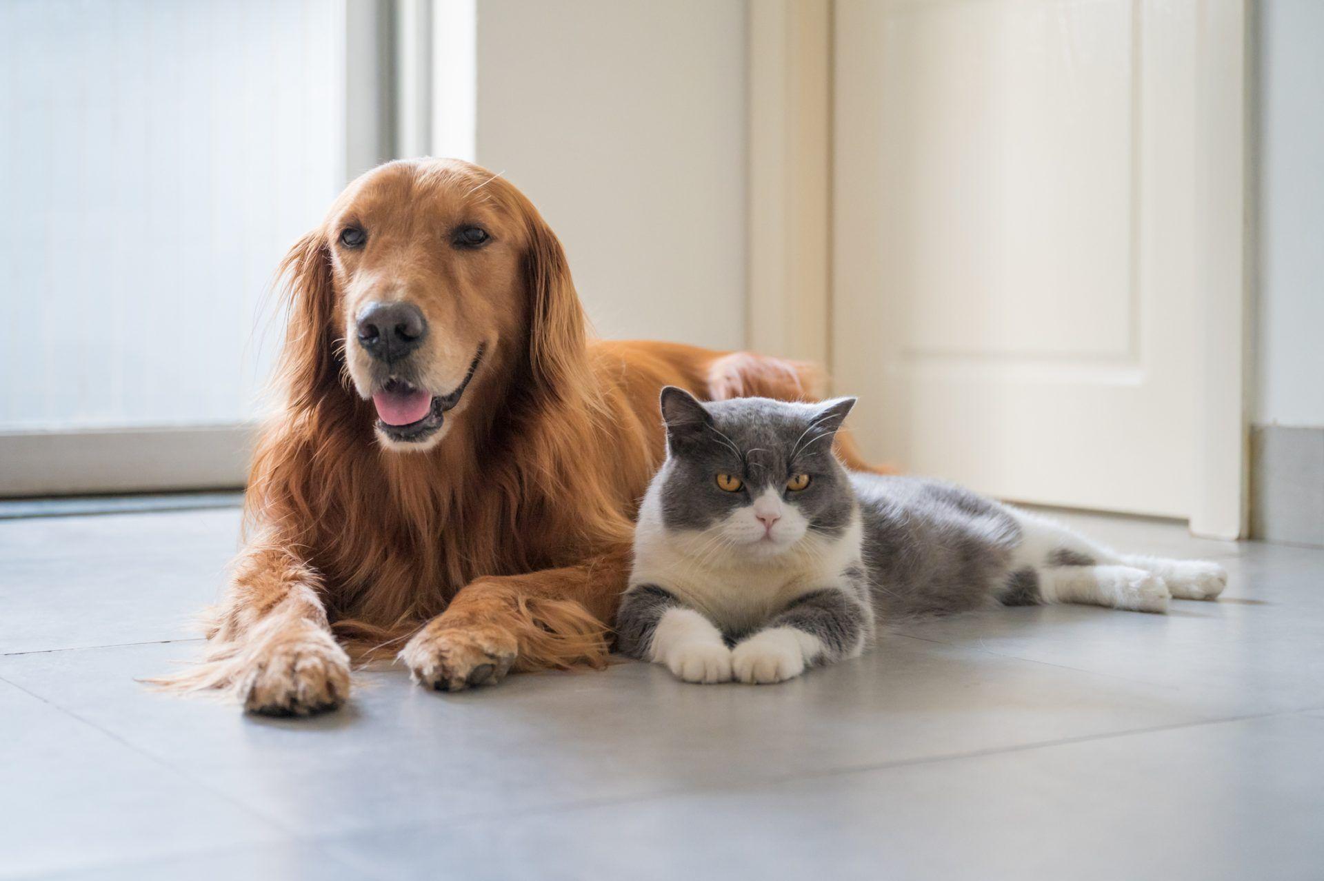 Consejos para el cuidado de tu mascota