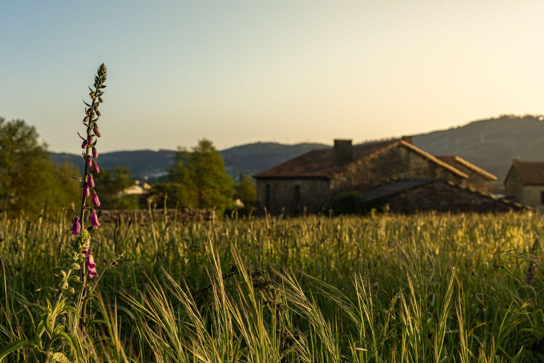 Trucos para conseguir fotos de paisajes naturales sin filtros
