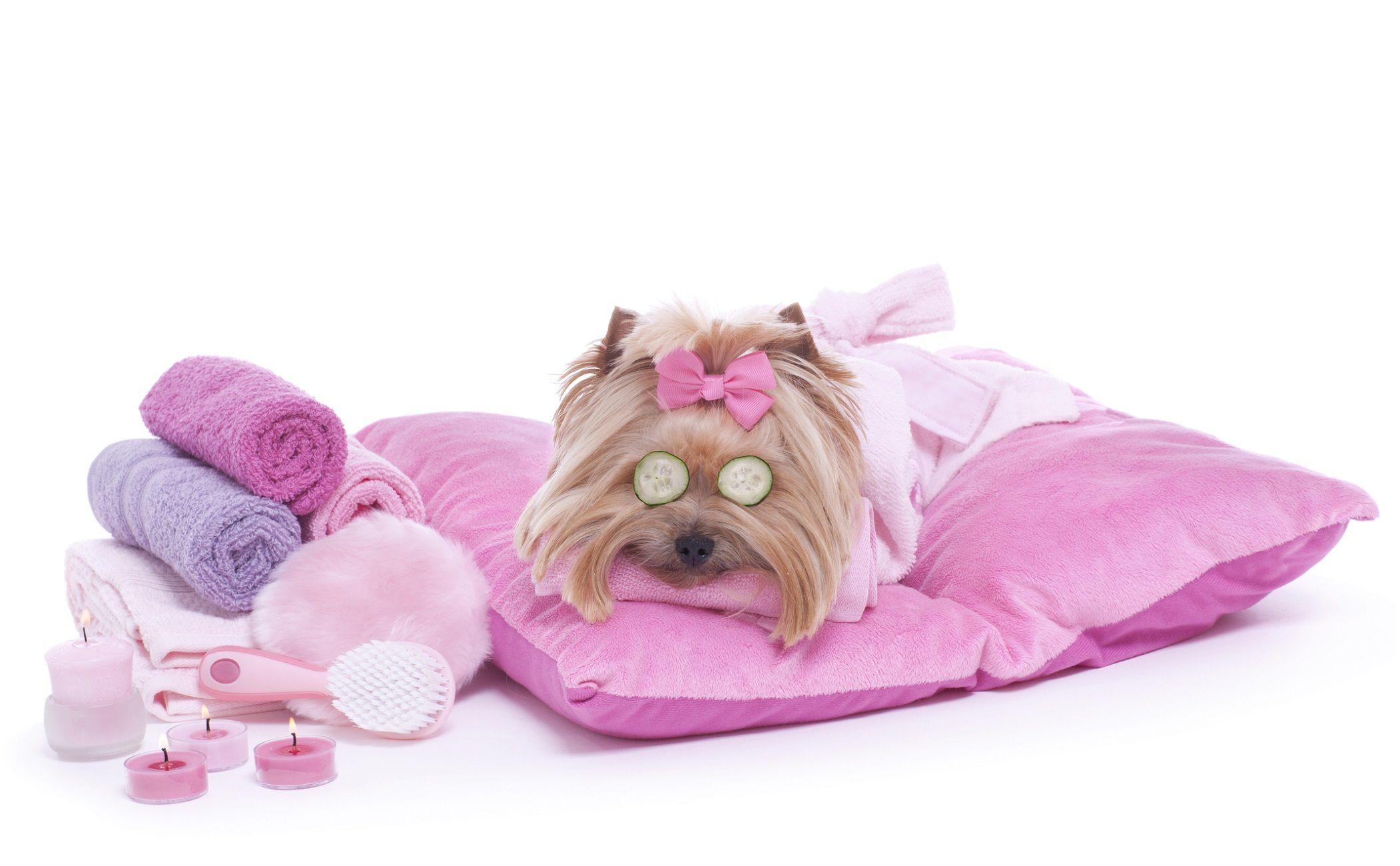 Todo lo que debes saber sobre estética canina