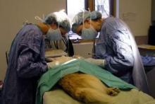 Auxiliar Técnico de Veterinaria