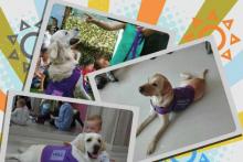 Intervención asistida con animales