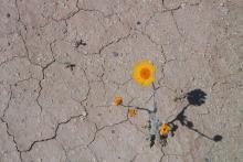 Atrévete a ser la flor que crece en el desierto