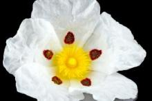 Técnico en Aromaterapia Integrada