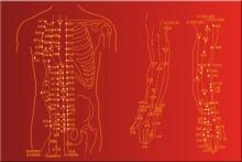 Curso de Medicina Tradicional China. Escuela EKIO