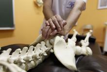 Curso de Osteopatía en Andramari