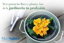 Curso de jardinería
