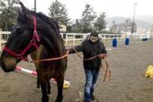 En todos nuestros procesos de formación incluimos una sesión de Coaching con PNL asistida con caballos para potenciar tu toma de conciencia y acción en algunas áreas.