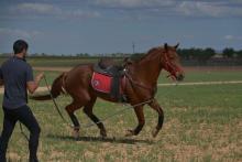 Curso Equitación